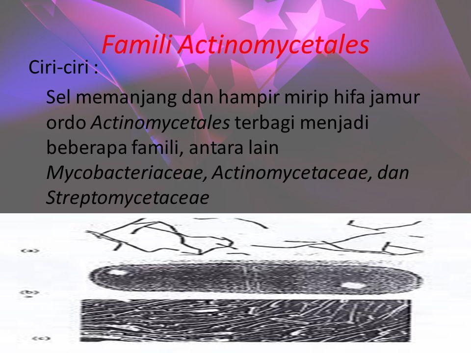 Famili Actinomycetales