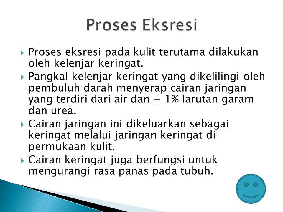 Proses Eksresi Proses eksresi pada kulit terutama dilakukan oleh kelenjar keringat.