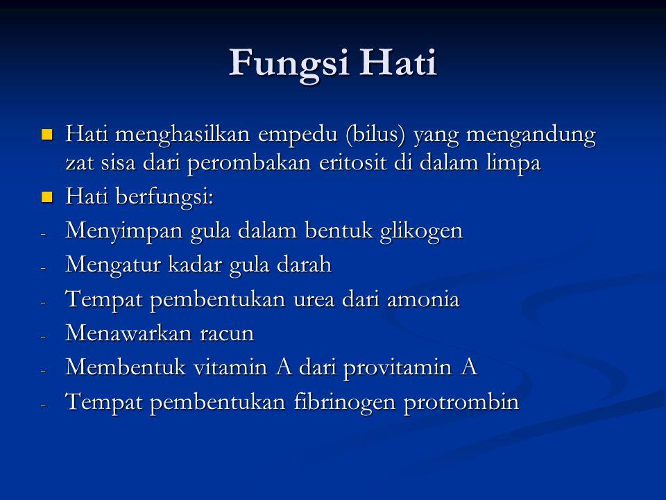 Fungsi Hati Hati menghasilkan empedu (bilus) yang mengandung zat sisa dari perombakan eritosit di dalam limpa.