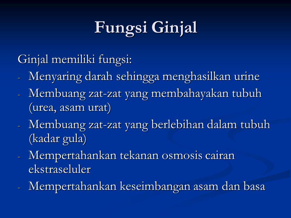 Fungsi Ginjal Ginjal memiliki fungsi: