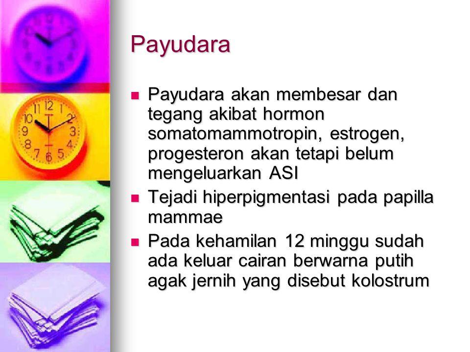 Payudara Payudara akan membesar dan tegang akibat hormon somatomammotropin, estrogen, progesteron akan tetapi belum mengeluarkan ASI.