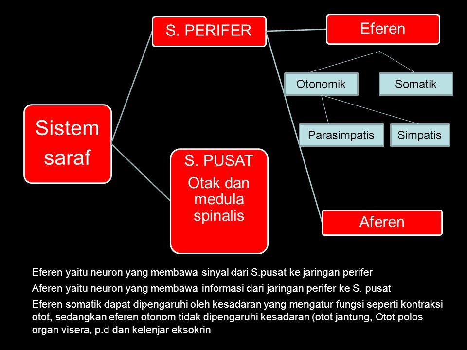 Otak dan medula spinalis