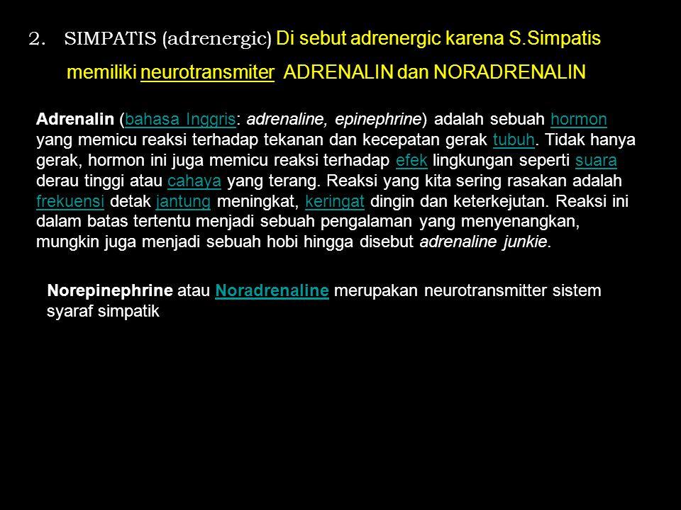 2. SIMPATIS (adrenergic) Di sebut adrenergic karena S