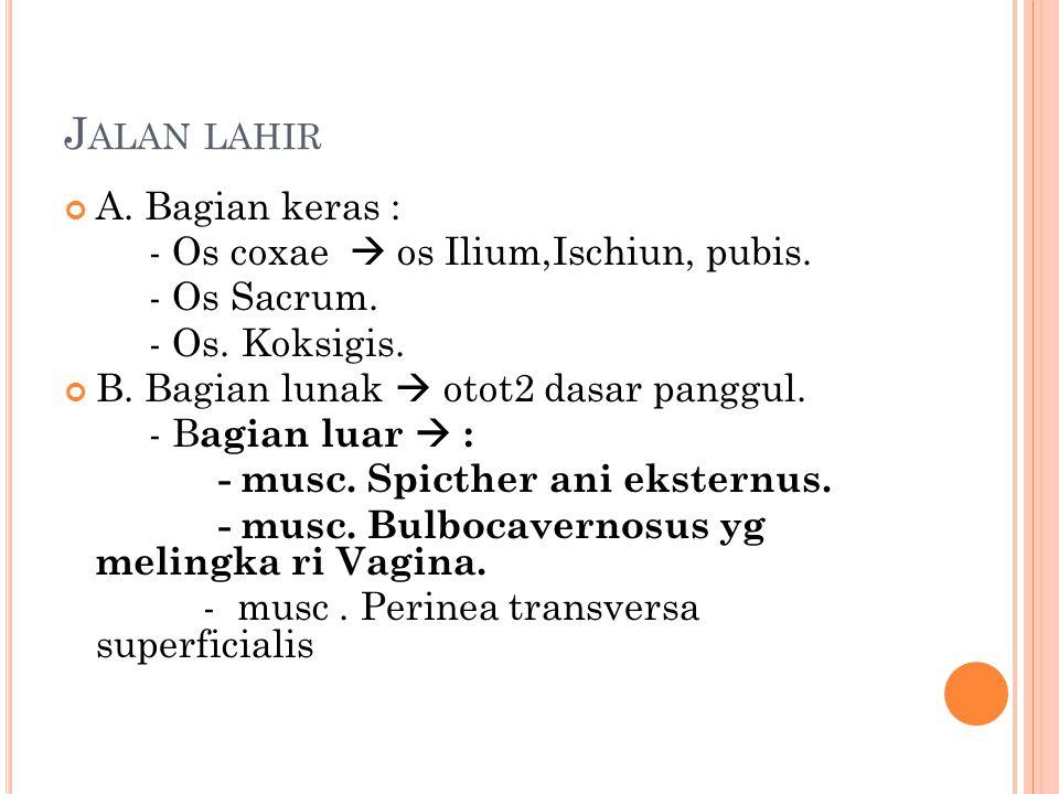 Jalan lahir A. Bagian keras : - Os coxae  os Ilium,Ischiun, pubis.