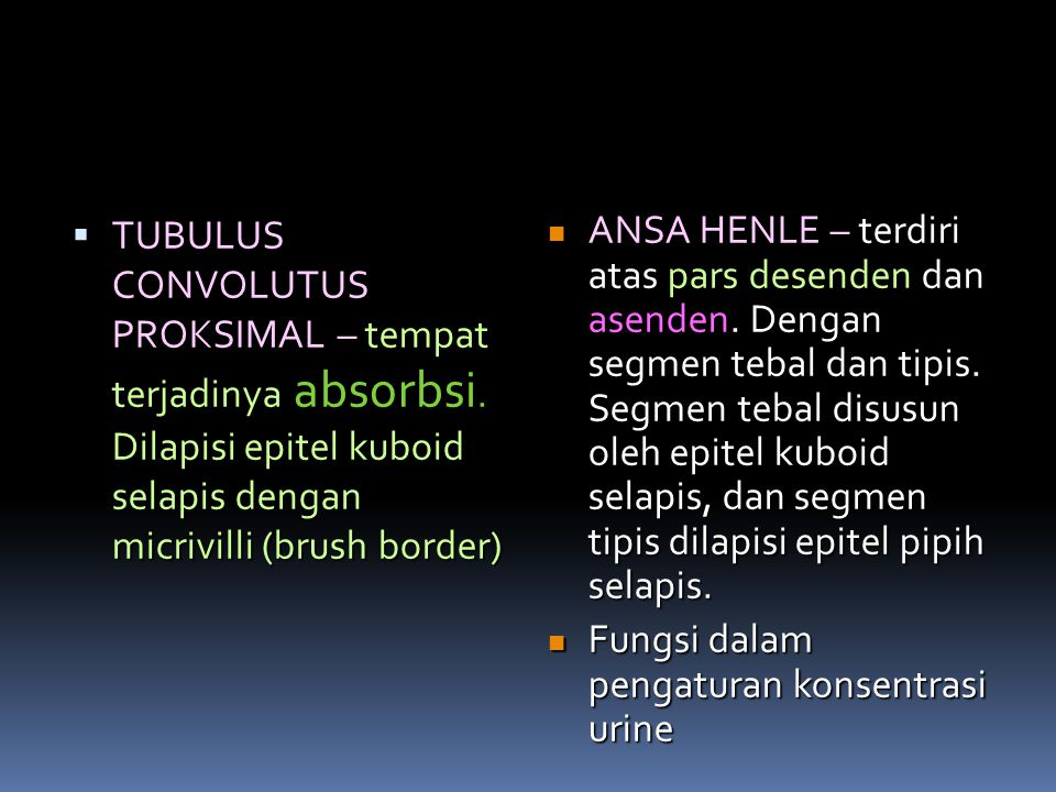 TUBULUS CONVOLUTUS PROKSIMAL – tempat terjadinya absorbsi