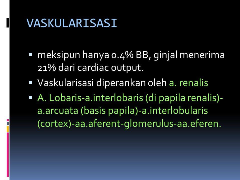 VASKULARISASI meksipun hanya 0.4% BB, ginjal menerima 21% dari cardiac output. Vaskularisasi diperankan oleh a. renalis.