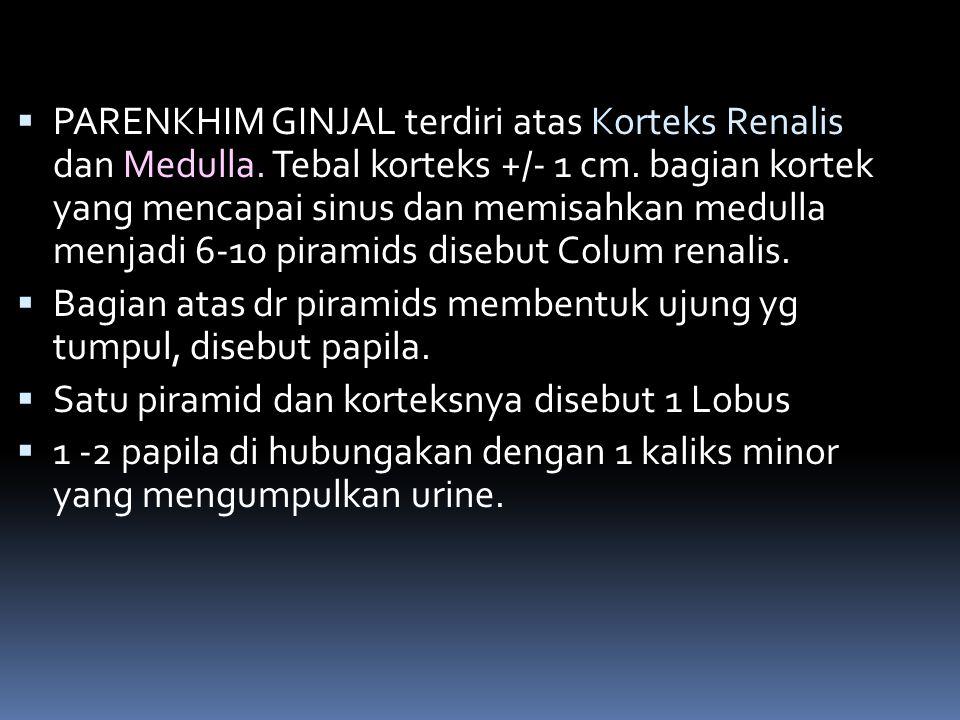 PARENKHIM GINJAL terdiri atas Korteks Renalis dan Medulla