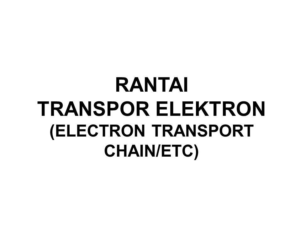 TRANSPOR ELEKTRON (ELECTRON TRANSPORT CHAIN/ETC)