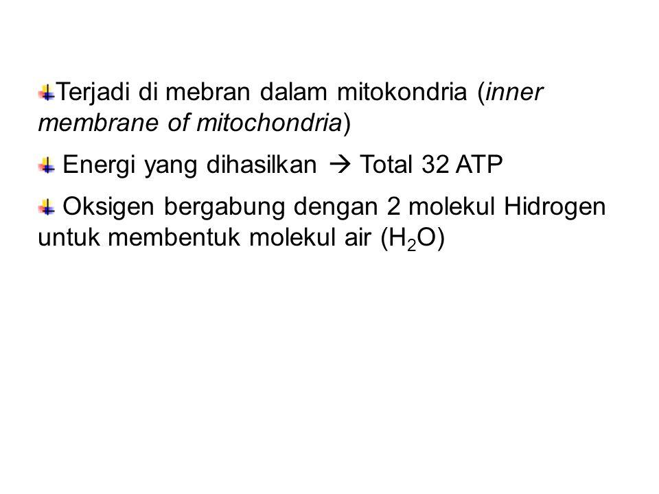 Terjadi di mebran dalam mitokondria (inner membrane of mitochondria)