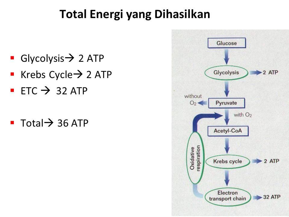 Total Energi yang Dihasilkan