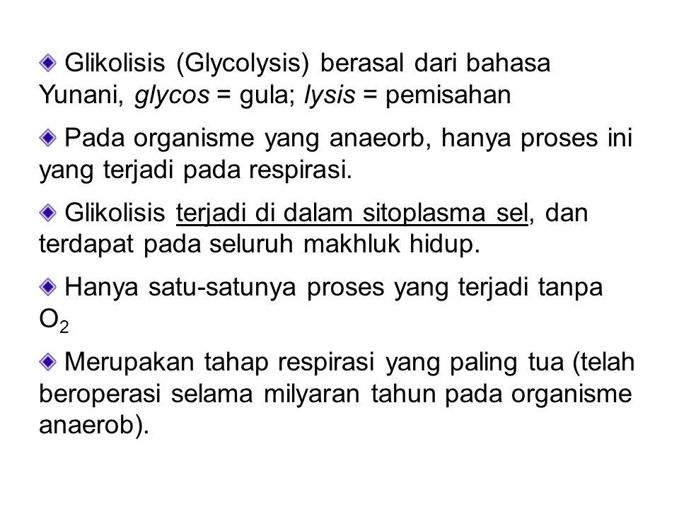 Glikolisis (Glycolysis) berasal dari bahasa Yunani, glycos = gula; lysis = pemisahan