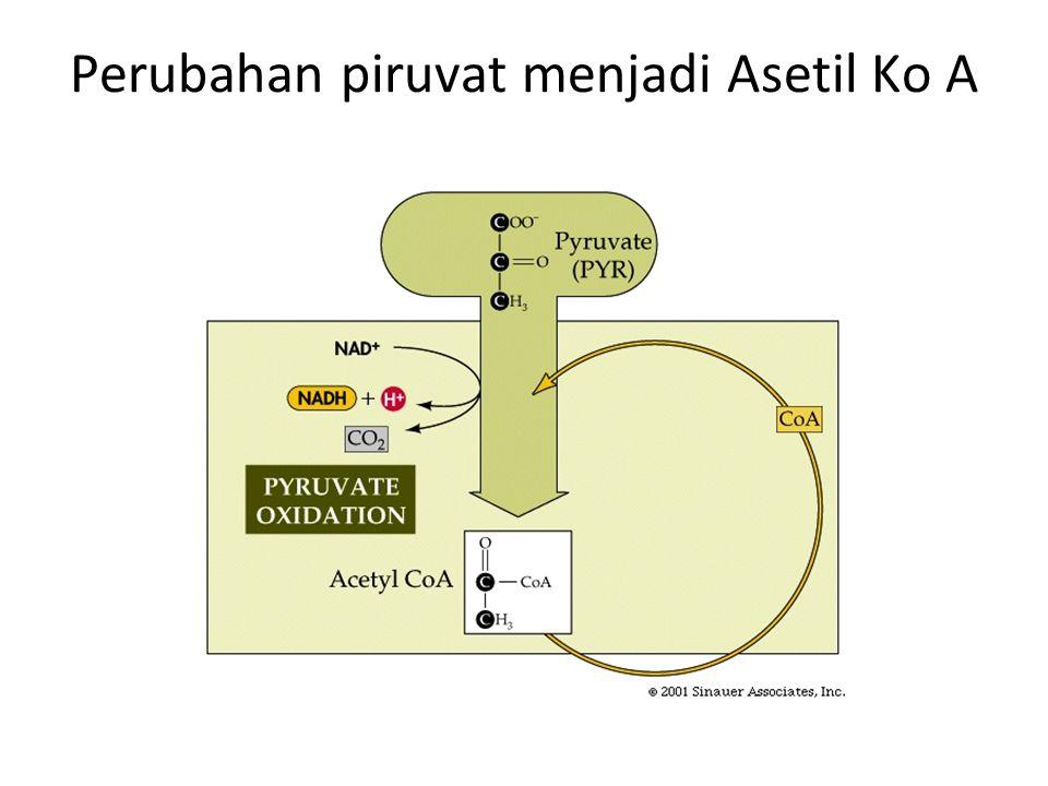 Perubahan piruvat menjadi Asetil Ko A