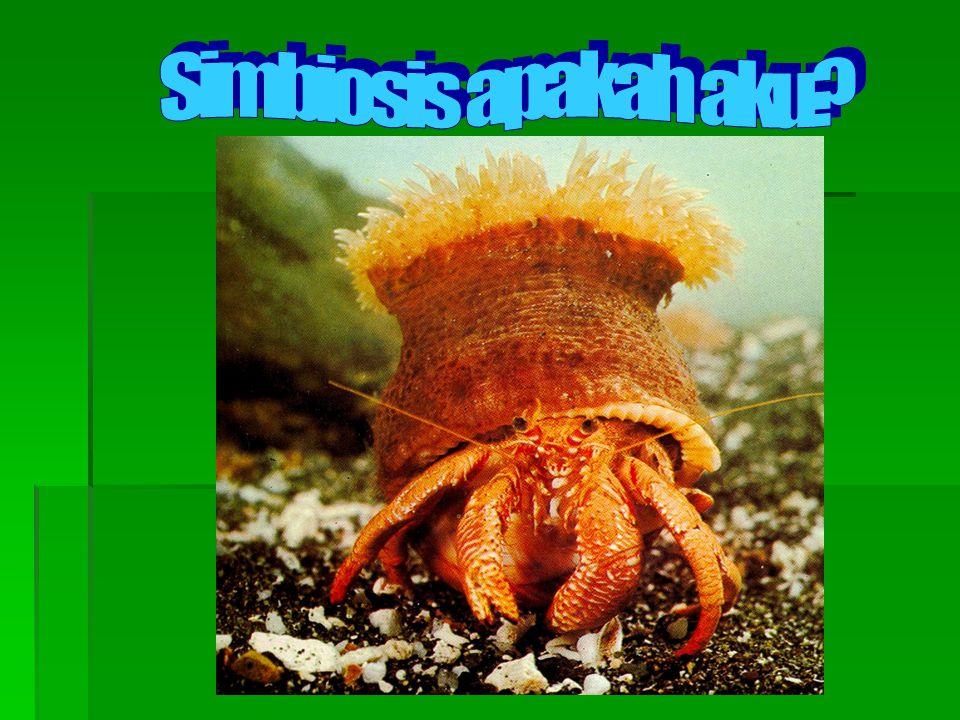 Simbiosis apakah aku