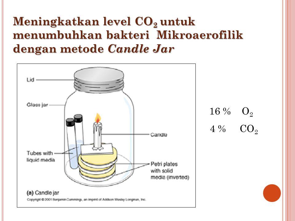 Meningkatkan level CO2 untuk menumbuhkan bakteri Mikroaerofilik dengan metode Candle Jar