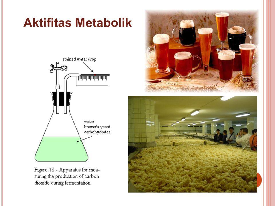 Aktifitas Metabolik
