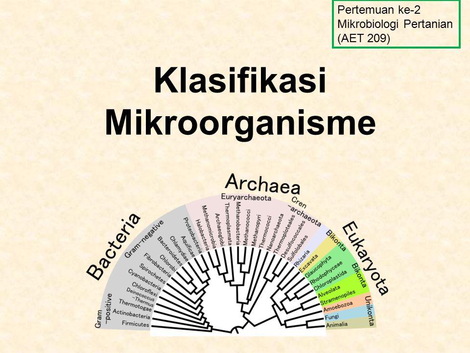 Klasifikasi Mikroorganisme