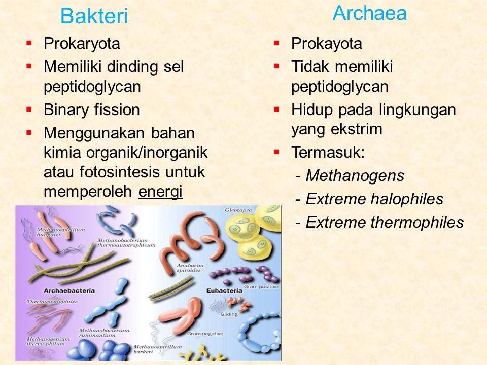Bakteri Archaea Prokaryota Memiliki dinding sel peptidoglycan