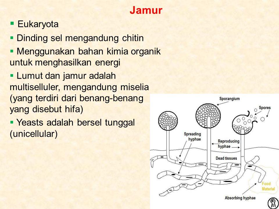 Jamur Eukaryota Dinding sel mengandung chitin