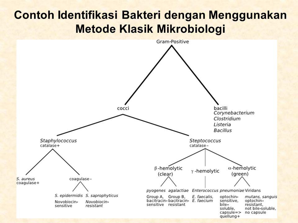 Contoh Identifikasi Bakteri dengan Menggunakan