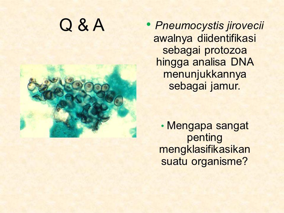 Mengapa sangat penting mengklasifikasikan suatu organisme