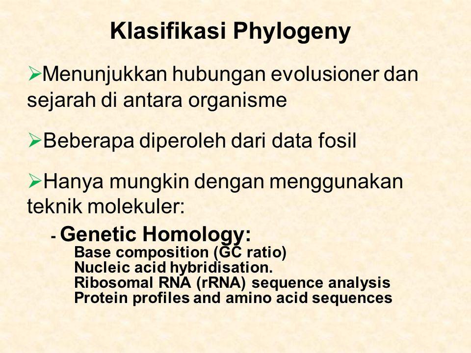 Klasifikasi Phylogeny