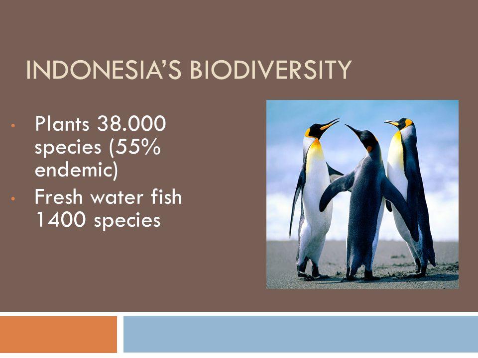 Indonesia's Biodiversity