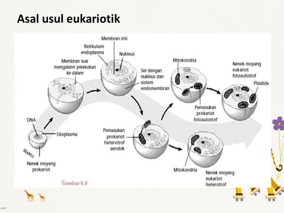 Asal usul eukariotik
