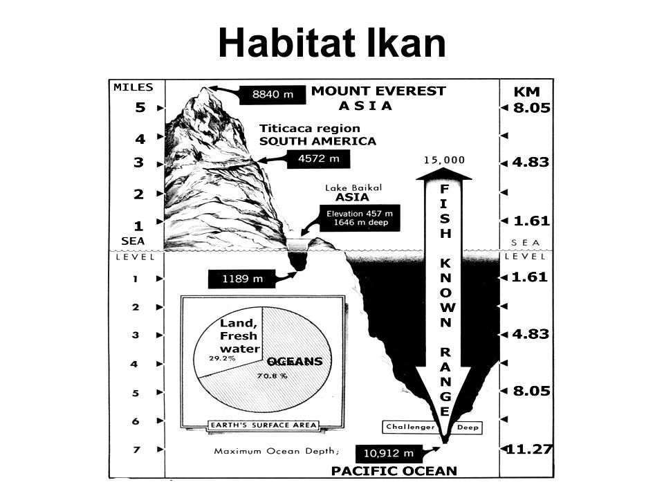 Habitat Ikan