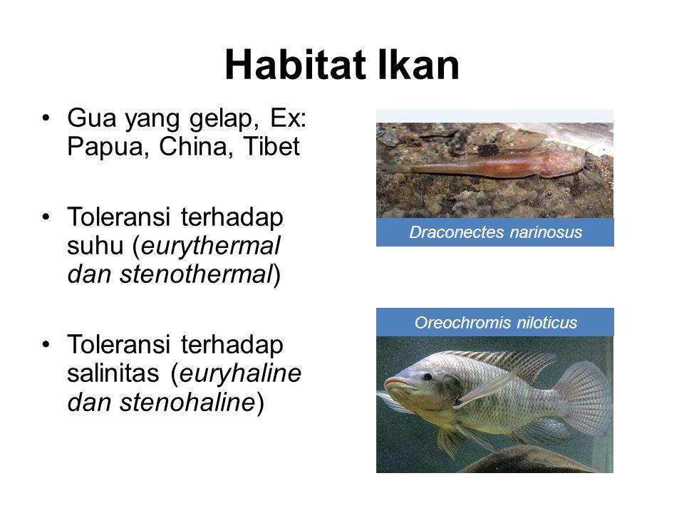 Habitat Ikan Gua yang gelap, Ex: Papua, China, Tibet
