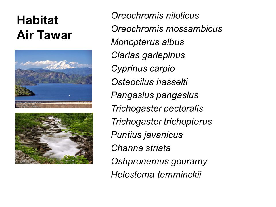 Habitat Air Tawar