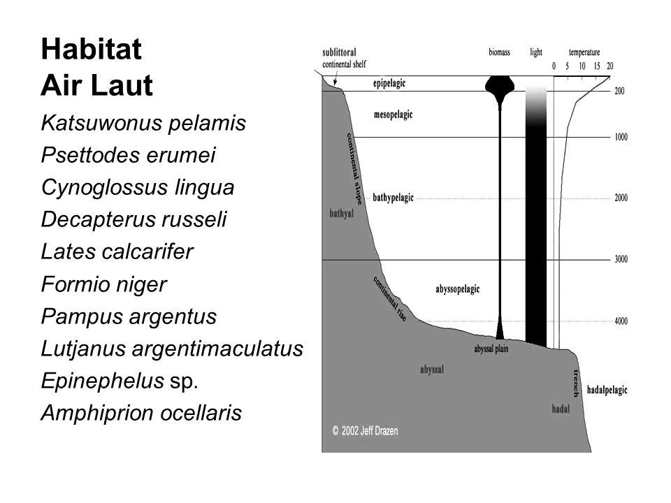 Habitat Air Laut Katsuwonus pelamis Psettodes erumei