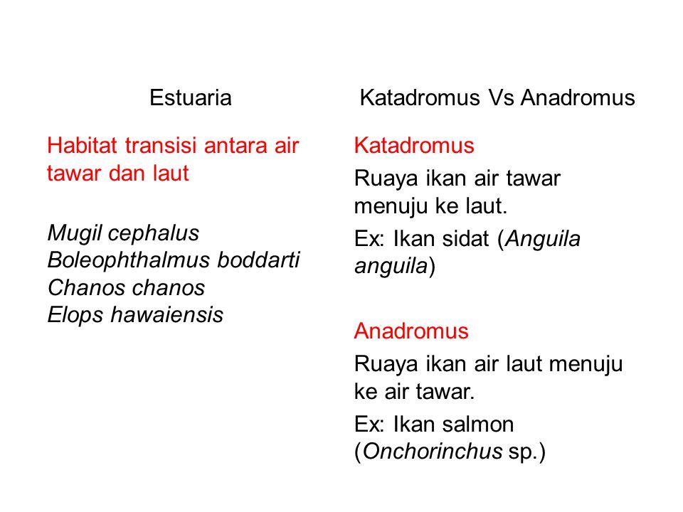 Katadromus Vs Anadromus