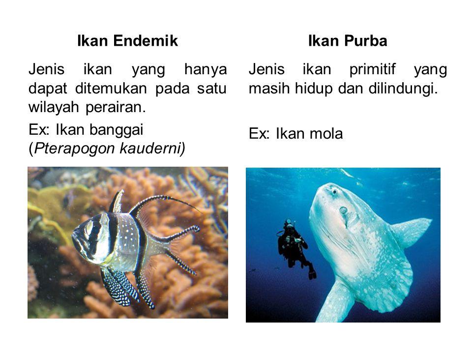 Ikan Endemik Ikan Purba. Jenis ikan yang hanya dapat ditemukan pada satu wilayah perairan. Ex: Ikan banggai (Pterapogon kauderni)