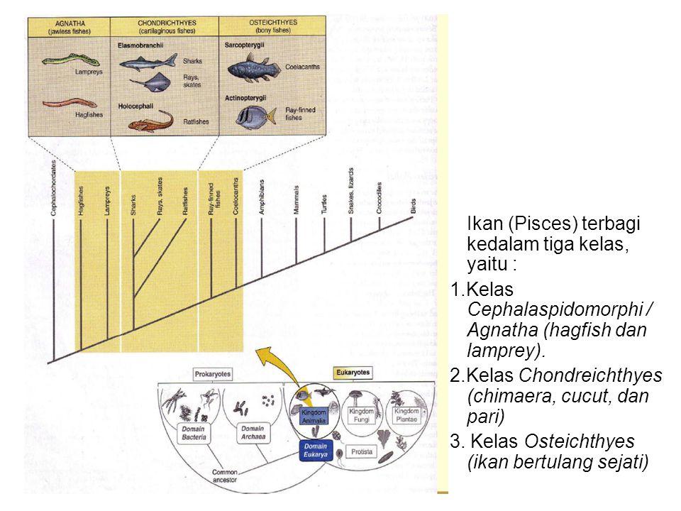 Ikan (Pisces) terbagi kedalam tiga kelas, yaitu :