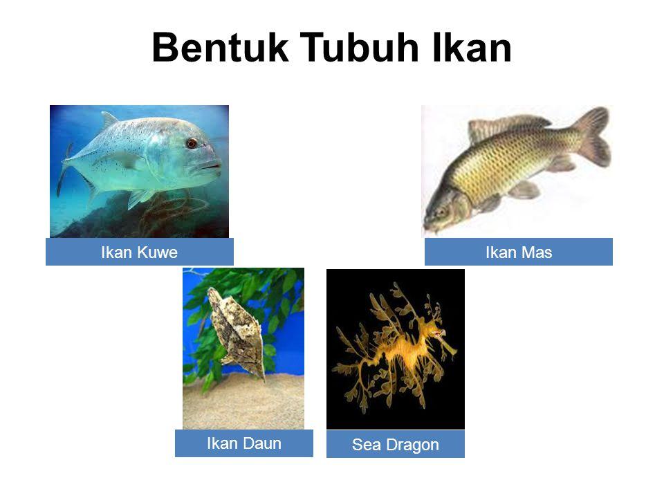Bentuk Tubuh Ikan Ikan Kuwe Ikan Mas Ikan Daun Sea Dragon