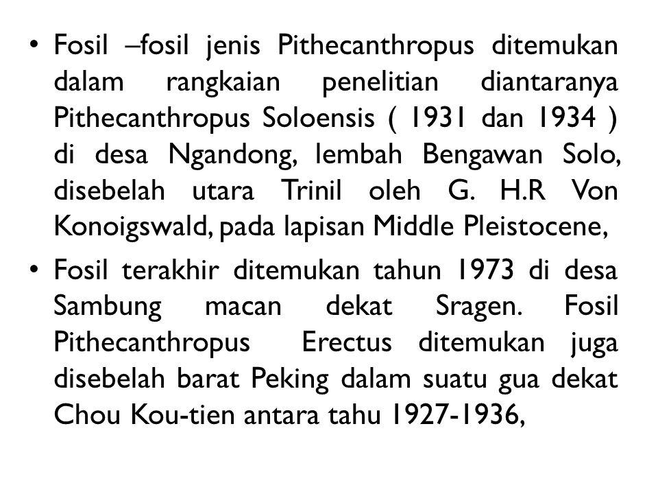 Fosil –fosil jenis Pithecanthropus ditemukan dalam rangkaian penelitian diantaranya Pithecanthropus Soloensis ( 1931 dan 1934 ) di desa Ngandong, lembah Bengawan Solo, disebelah utara Trinil oleh G. H.R Von Konoigswald, pada lapisan Middle Pleistocene,