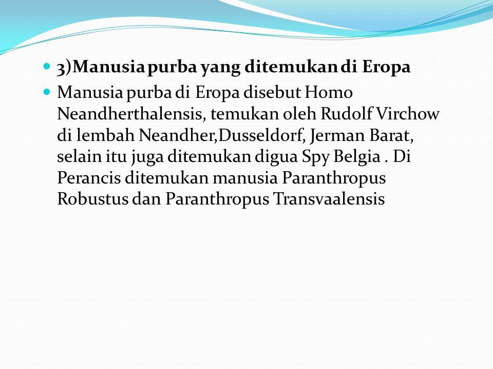 3)Manusia purba yang ditemukan di Eropa
