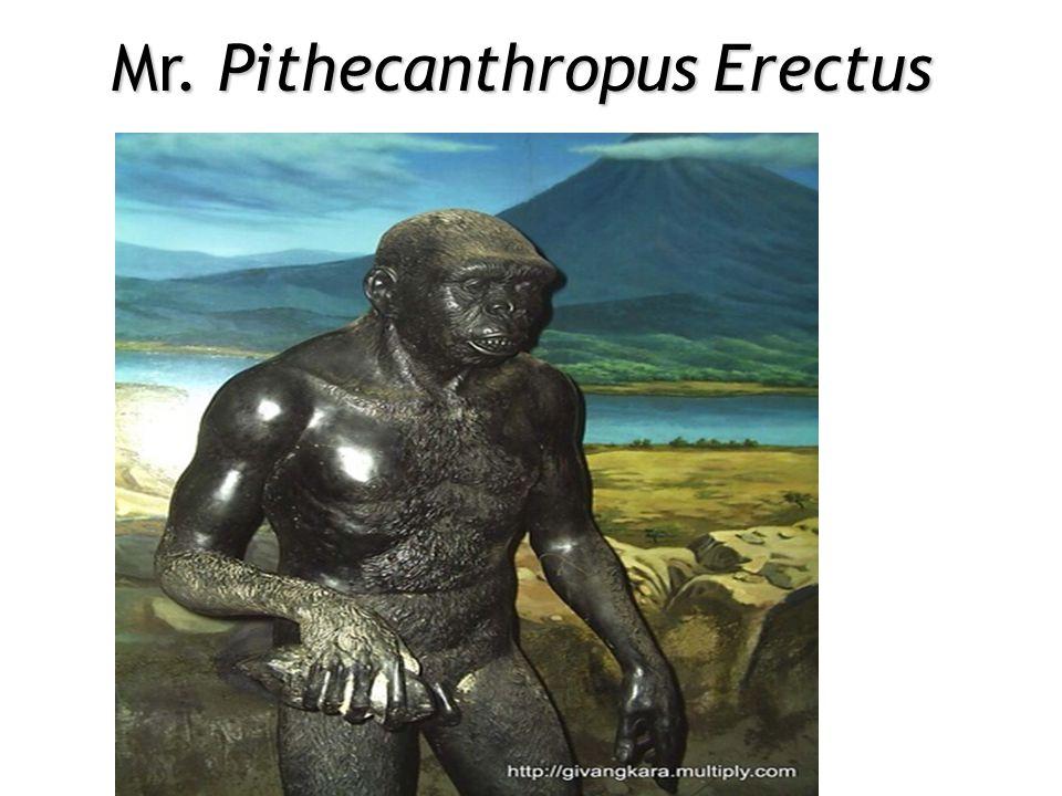 Mr. Pithecanthropus Erectus