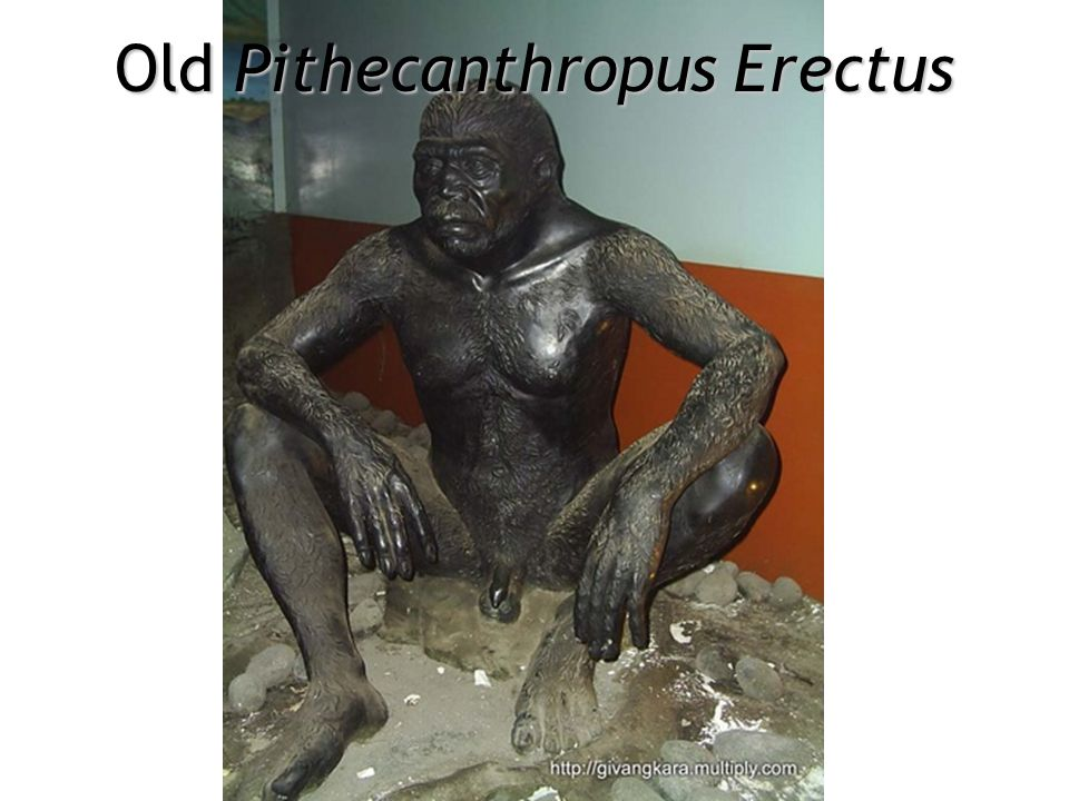 Old Pithecanthropus Erectus