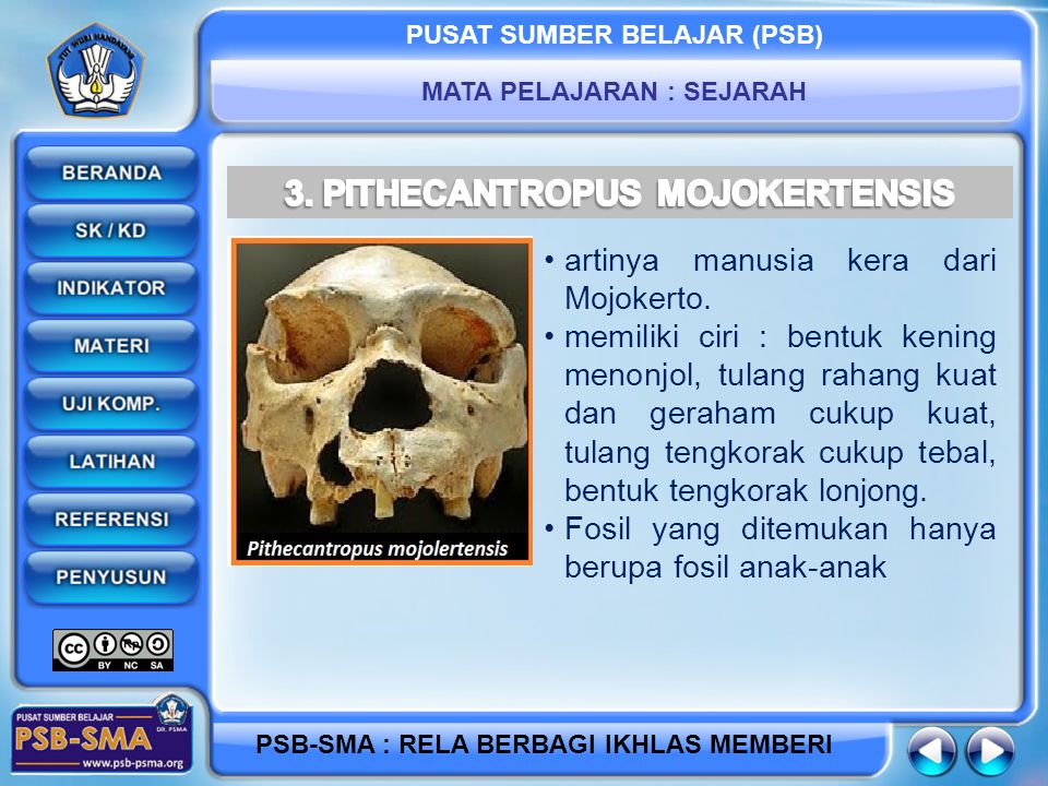 3. PITHECANTROPUS MOJOKERTENSIS