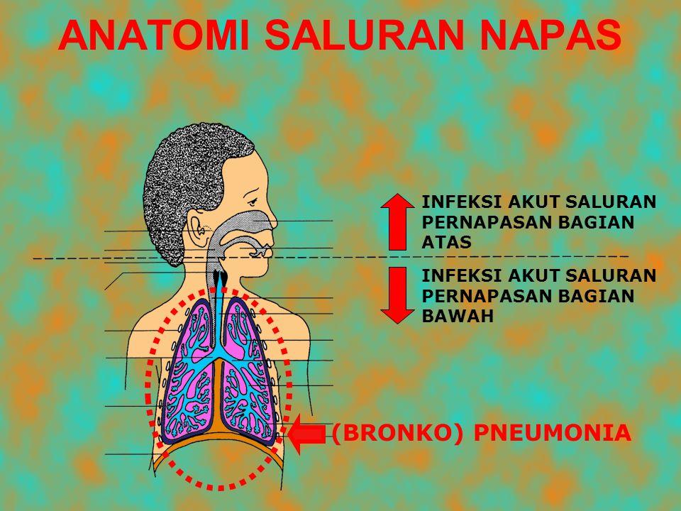 ANATOMI SALURAN NAPAS (BRONKO) PNEUMONIA INFEKSI AKUT SALURAN