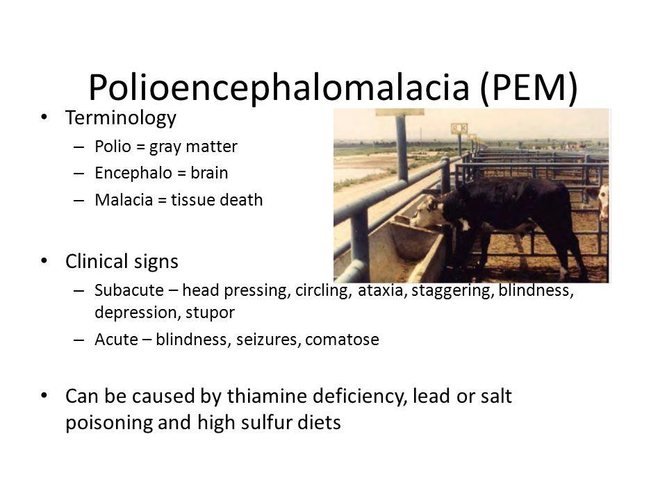 Polioencephalomalacia (PEM)