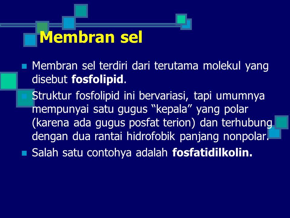 Membran sel Membran sel terdiri dari terutama molekul yang disebut fosfolipid.