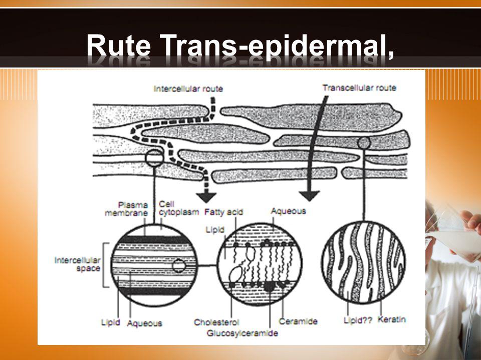 Rute Trans-epidermal,