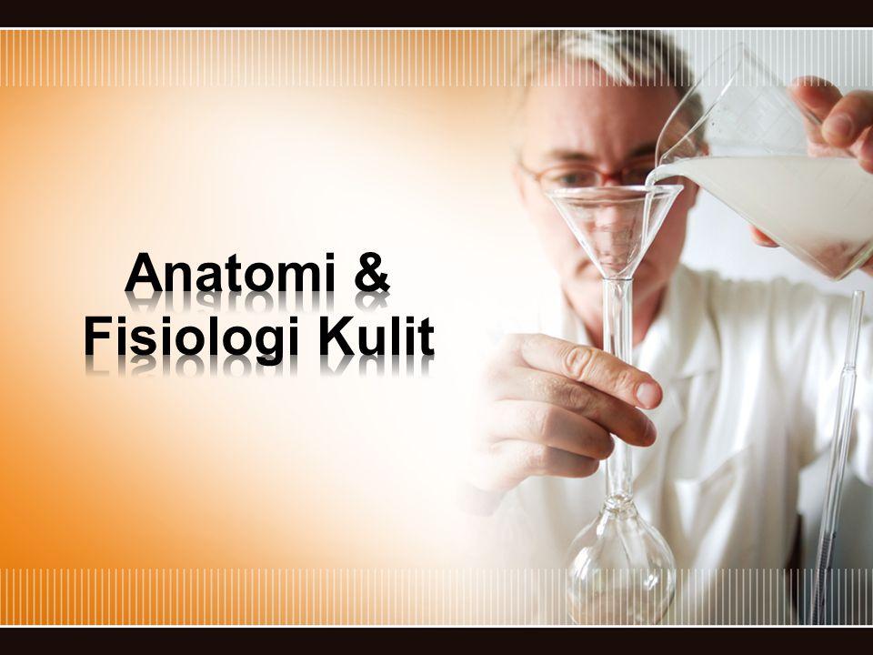 Anatomi & Fisiologi Kulit