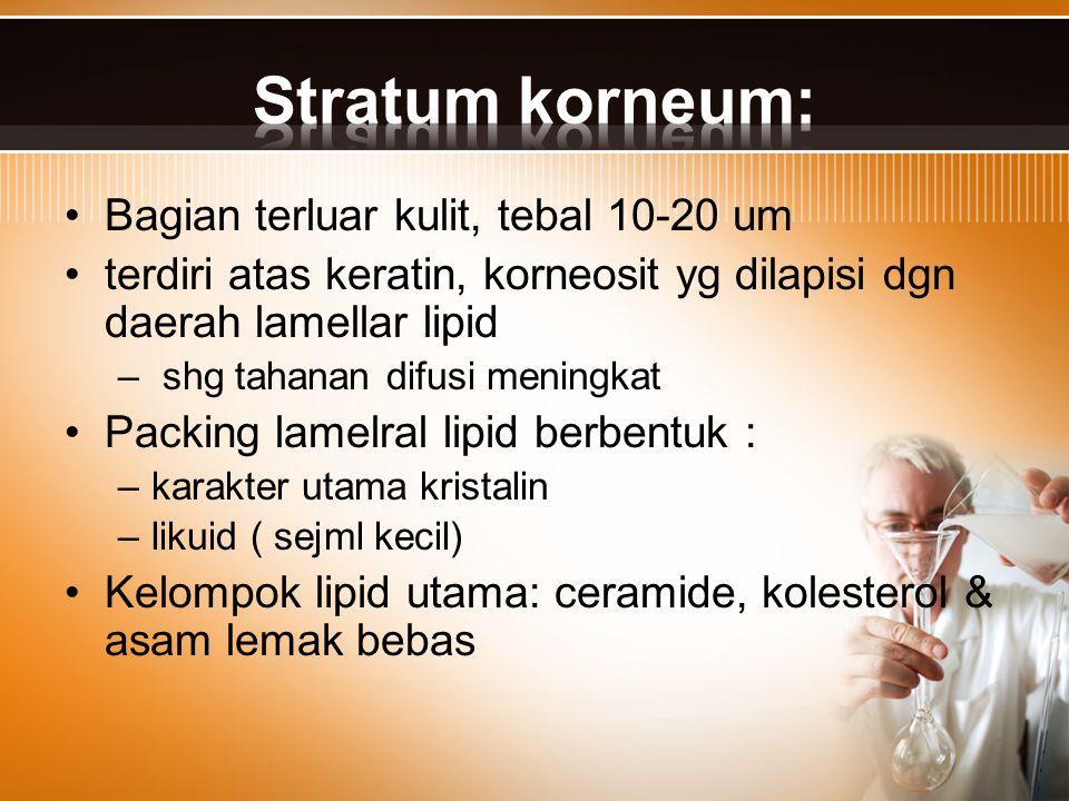 Stratum korneum: Bagian terluar kulit, tebal 10-20 um