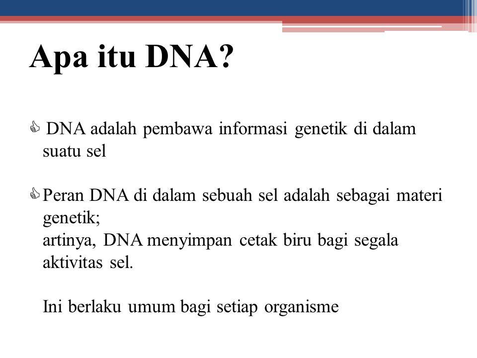 Apa itu DNA  DNA adalah pembawa informasi genetik di dalam suatu sel