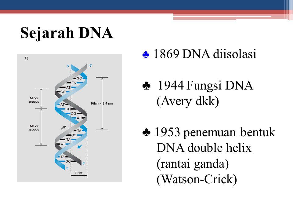 Sejarah DNA ♣ 1944 Fungsi DNA (Avery dkk)