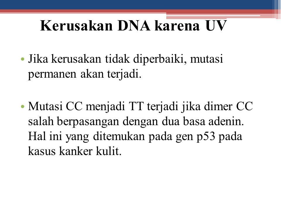 Kerusakan DNA karena UV