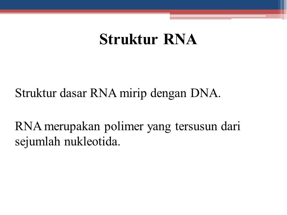 Struktur RNA Struktur dasar RNA mirip dengan DNA.